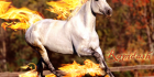 Rapidash